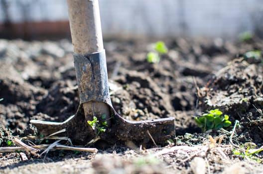 garden-dirt